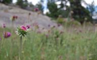 Rocky Mountain National Park Wildflowers 26 Wide Wallpaper