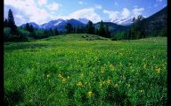 Rocky Mountain National Park Wildflowers 28 Desktop Background