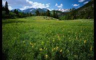 Rocky Mountain National Park Wildflowers 33 Background Wallpaper