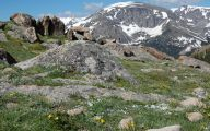 Rocky Mountain National Park Wildflowers 35 Background Wallpaper