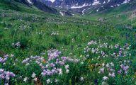 Rocky Mountain National Park Wildflowers 8 High Resolution Wallpaper
