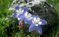 Rocky Mountain Plants And Flowers 14 Free Wallpaper