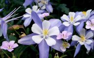 Rocky Mountain Plants And Flowers 16 Free Hd Wallpaper