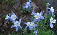 Rocky Mountain Plants And Flowers 22 High Resolution Wallpaper
