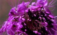 Rocky Mountain Plants And Flowers 23 Background