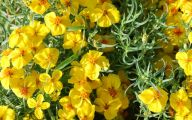 Rocky Mountain Plants And Flowers 26 Hd Wallpaper