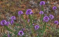 Rocky Mountain Plants And Flowers 3 Cool Hd Wallpaper