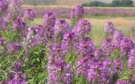 Rocky Mountain Plants And Flowers 9 Cool Hd Wallpaper