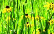 Rocky Mountain Wildflowers Photos 11 Wide Wallpaper