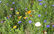 Rocky Mountain Wildflowers Photos 12 Wide Wallpaper