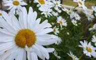 Rocky Mountain Wildflowers Photos 13 Free Hd Wallpaper