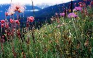 Rocky Mountain Wildflowers Photos 16 Wide Wallpaper