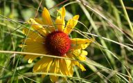 Rocky Mountain Wildflowers Photos 25 Hd Wallpaper