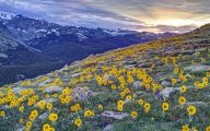 Rocky Mountain Wildflowers Photos 26 Free Wallpaper