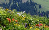 Rocky Mountain Wildflowers Photos 3 Cool Hd Wallpaper