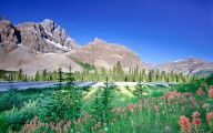 Rocky Mountain Wildflowers Photos 30 Wide Wallpaper