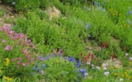 Rocky Mountain Wildflowers Photos 31 Cool Wallpaper