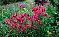 Rocky Mountain Wildflowers Photos 4 Background