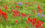 Rocky Mountain Wildflowers Photos 6 Cool Hd Wallpaper