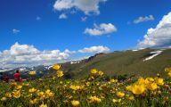 Rocky Mountain Wildflowers Photos 7 Hd Wallpaper