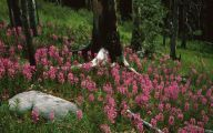 Rocky Mountain Wildflowers Photos 8 Desktop Background