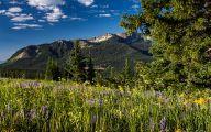 Rocky Mountain Wildflowers Photos 9 Background