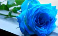 Small Rose Blue Wallpaper  7 Background