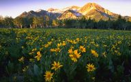 Types Of Mountain Flowers 18 Cool Wallpaper