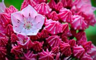 Types Of Mountain Flowers 22 Wide Wallpaper