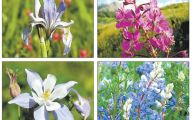 Types Of Mountain Flowers 23 Free Wallpaper