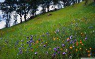 Types Of Mountain Flowers 26 Desktop Background
