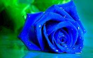 Wallpaper Of Blue Roses  12 Desktop Wallpaper