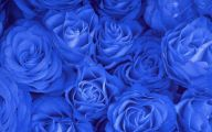 Wallpaper Of Blue Roses  13 Desktop Background