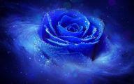 Wallpaper Of Blue Roses  19 Cool Wallpaper