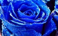 Wallpaper Of Blue Roses  3 Wide Wallpaper