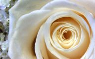 White Rose Wallpaper  22 Cool Wallpaper