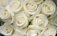White Rose Wallpaper  4 Wide Wallpaper