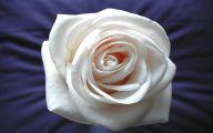 White Rose Wallpaper  5 Desktop Background