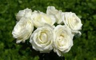 White Roses Wallpapers For Desktop  11 Wide Wallpaper