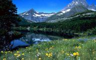 Wildflowers Of The Rocky Mountains 13 Desktop Wallpaper