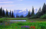 Wildflowers Of The Rocky Mountains 19 Desktop Wallpaper