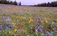 Wildflowers Of The Rocky Mountains 21 Hd Wallpaper