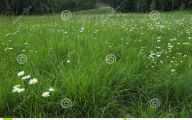 Wildflowers Of The Rocky Mountains 4 Free Wallpaper