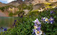 Wildflowers Of The Rocky Mountains 9 Desktop Wallpaper