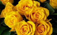 Yellow Flower Hd Wallpaper  1 High Resolution Wallpaper