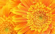 Yellow Flower Hd Wallpaper  14 Free Hd Wallpaper