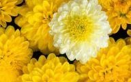Yellow Flower Hd Wallpaper  16 Cool Hd Wallpaper