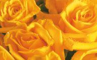 Yellow Flower Wallpaper  11 Background