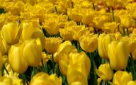 Yellow Flower Wallpaper  14 Free Hd Wallpaper