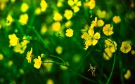 Yellow Flower Wallpaper  48 Hd Wallpaper